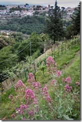 AmalfiCoast2012-7489